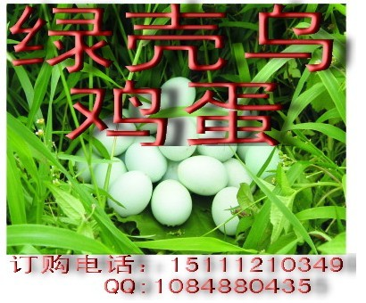 安农一鸣绿壳乌鸡蛋的营养食疗价值